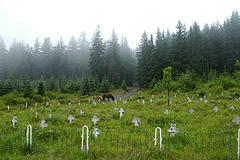 Hřbitov rakouských vojáků z1.světové války