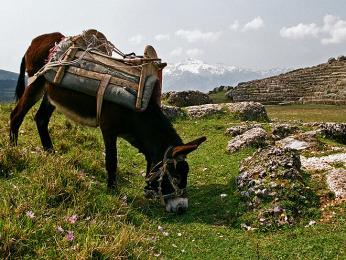 V Albánii je stále běžné používání oslů jako dopravního prostředku
