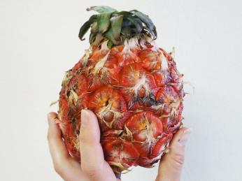 Na Azorských ostrovech se pěstují malé sladké ananasy