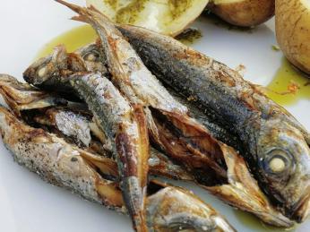 Pro Azorské ostrovy typické rybky chicarros