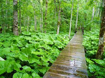 Relikt původního pralesa vnárodním parku Biogradska Gora