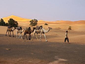 Sahara – duna Erg Chebbi