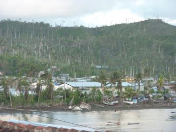 Po nedávném hurikánu jsou některé palmy téměř bez listí