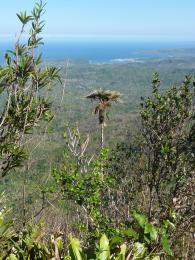 Pohled z vrcholu stolové hory ElYunque