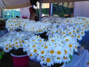 Květinový trh vTallinnu