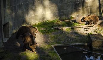 Medvědárium vBernu