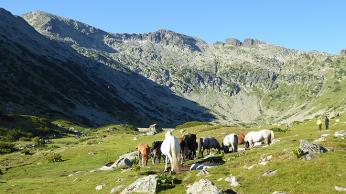 Volně se pasoucí koně cestou kVapě (2532m)