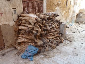 Skladování ovčích kožešin před zpracováním
