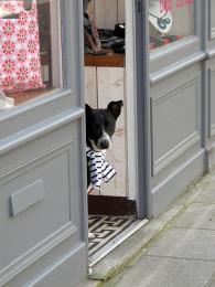Francouzská móda je nejen pro lidi, ale ipro jejich psí miláčky