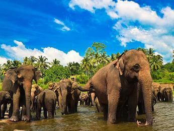 Sloni žijí ve velkých stádech