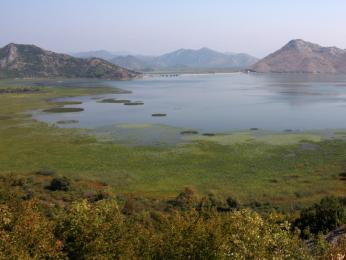 Skadarské jezero je bohaté na faunu iflóru