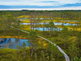 Rašeliniště Viru Raba vnárodním parku Lahemaa
