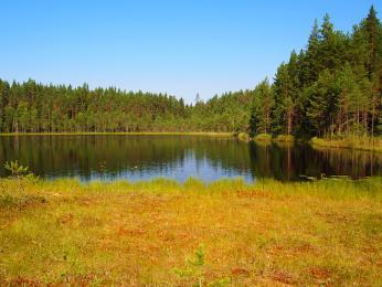 NP Leivonmäki kombinuje jezera, bažiny a hluboké lesy