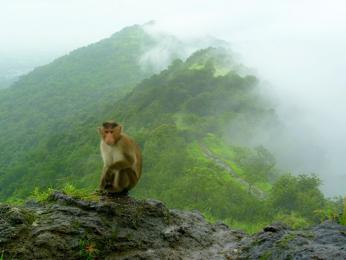 Během monzunového období je indická příroda nádherně zelená