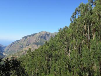Název Madeira získal ostrov díky hustému vavřínovému pralesu