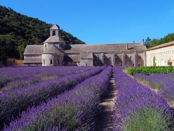 Pro Provence typická levandulová pole
