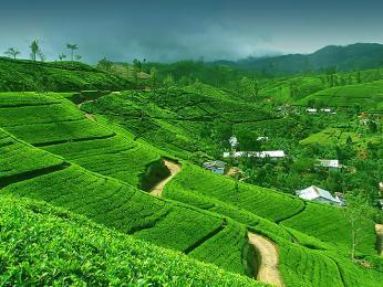 Místní klima je ideální kpěstování kvalitního srílanského čaje