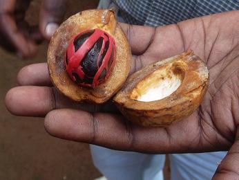 V tropickém podnebí ostrova se dají pěstovat třeba imuškátové oříšky