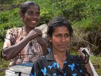 Srílanské ženy tráví celý den na plantážích sběrem čaje