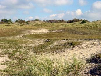 Písečné duny voblasti De Höge Veluwe