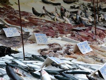 Dary moře jsou vitalské gastronomii hojně zastoupeny