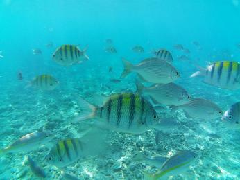 Karibské moře plné barevných ryb je ideální ke šnorchlování