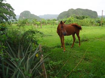 Údolí Viñales můžete projet vsedle koně