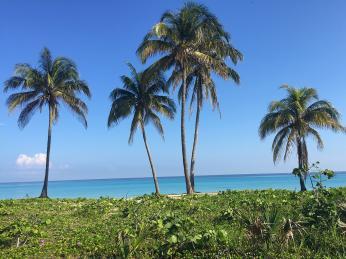 Palmy na plážích Varadera