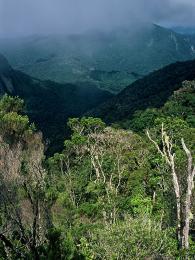 Horské lesy vpohoří Marojejy jsou jedny znejzachovalejších a nejkrásnějších