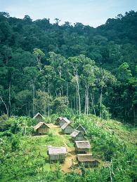 Osidlování Madagaskaru a přetváření panenské přírody stále pokračuje