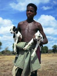 Spolu slidmi přišla na Madagaskar idomácí zvířata a zemědělské plodiny