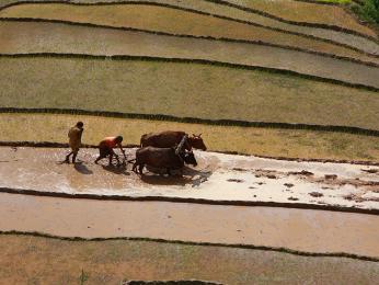 Po cestě do Nagarkotu můžete objevovat nepálský venkov