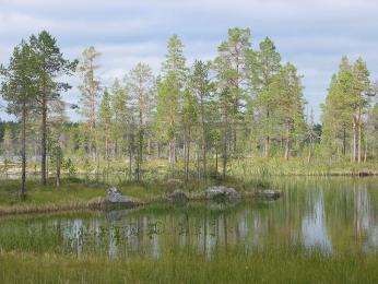 Lesy a jezera v NP Øvre Pasvik
