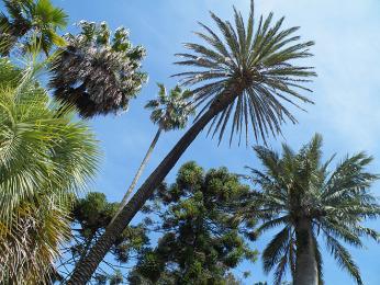 Čím více na jih, tím více palem a dalších tropických rostlin