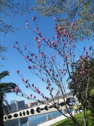 Stromy začínají rozkvétat už vúnoru!