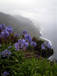 Černé skalnaté pobřeží Azorských ostrovů kontrastuje skvetoucí flórou