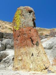 Zkamenělý les na ostrově Lesbos