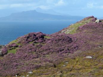 Podzimní vřesem pokrytá skotská krajina