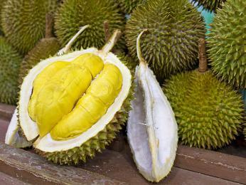 Durian cibetkový skvěle chutná, ale nepříjemně zapáchá