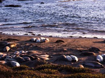 Tuleně je možné pozorovat hlavně na ostrovech a přilehlých útesech
