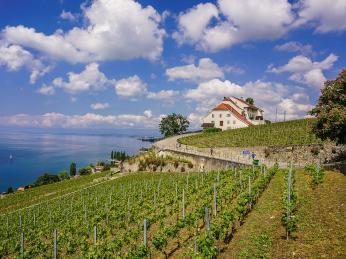 Zvinic oblasti Lavaux pochází nejlepší švýcarská vína