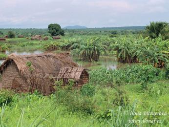 Domek uprostřed rýžových polí vzápadní Tanzanii