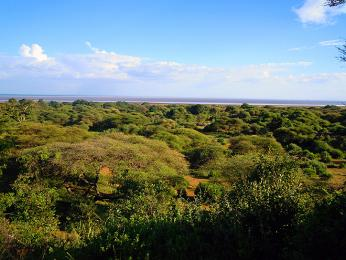 NP Lake Manyara