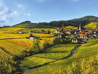 Rozsáhlé vinice táhnoucí se podél 180km dlouhé alsaské vinné stezky