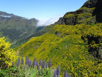 """Madeiře se ne nadarmo přezdívá """"ostrovvěčného jara"""""""