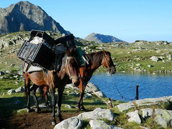 Koně nesou zásoby pro chatu uTemného jezera