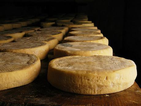 Bochníky alsaského sýra Munster