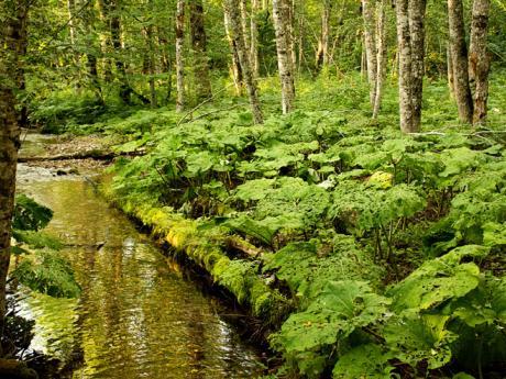 Biogradska Gora je nejstarším národním parkem Černé Hory