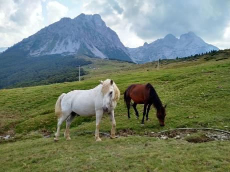 Koně na pastvinách v pohoří Komovi