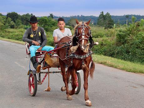 Koňský povoz je na Kubě stále hojně využívaný dopravní prostředek